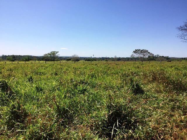 Lindo Sítio de 26 Alqueires á Venda á 21 km de Guarantã do Norte-MT