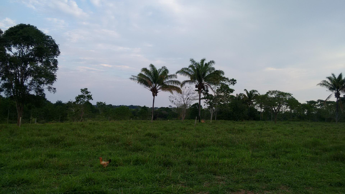 Sítio à venda, 871200 m² por R$ 1.360.000 - Rural - Nova Guarita/Mato Grosso